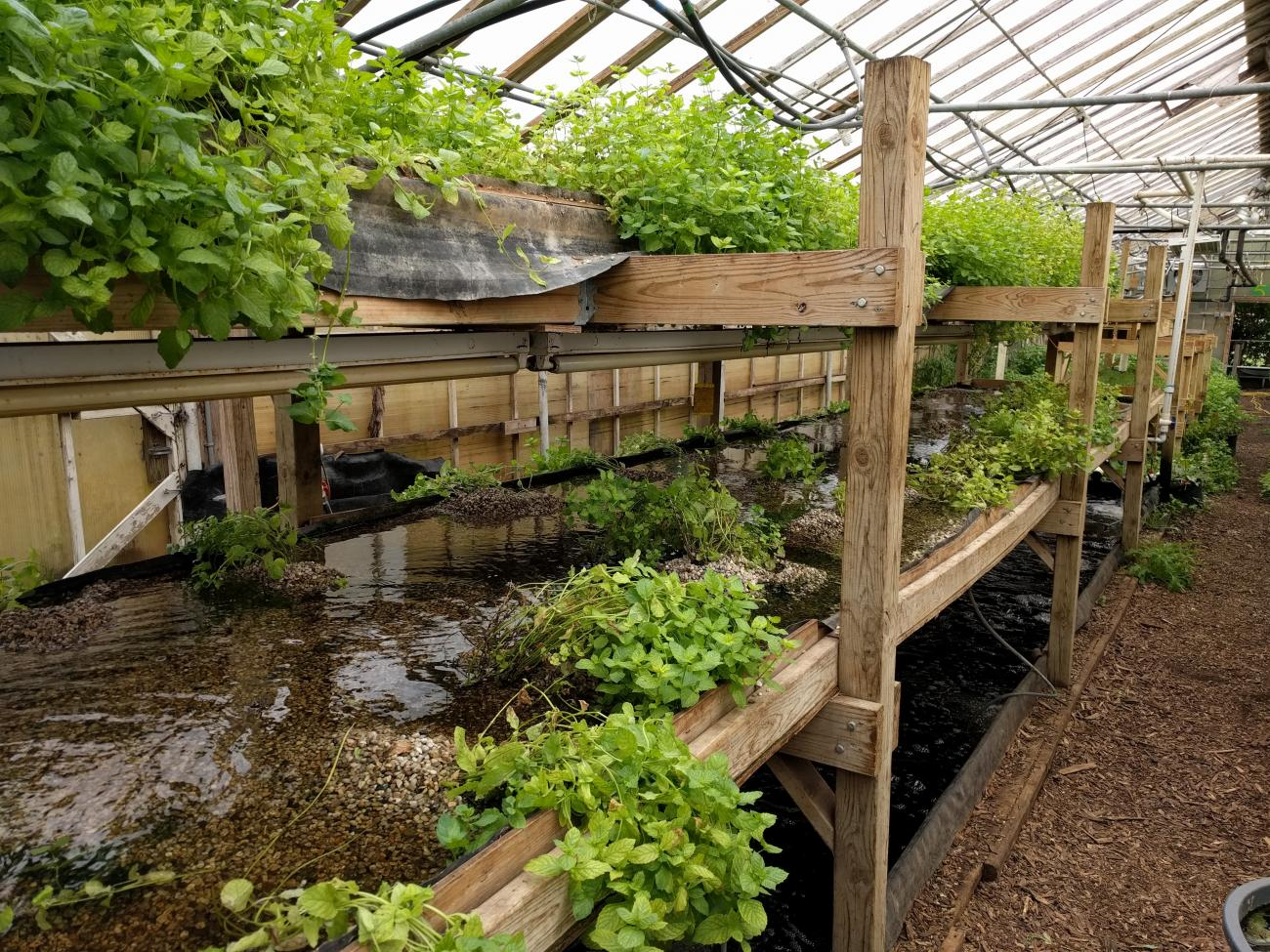 inside a Growing Power greenhouse